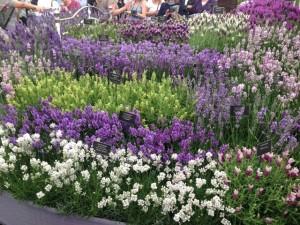 Chelsea Flower Show27