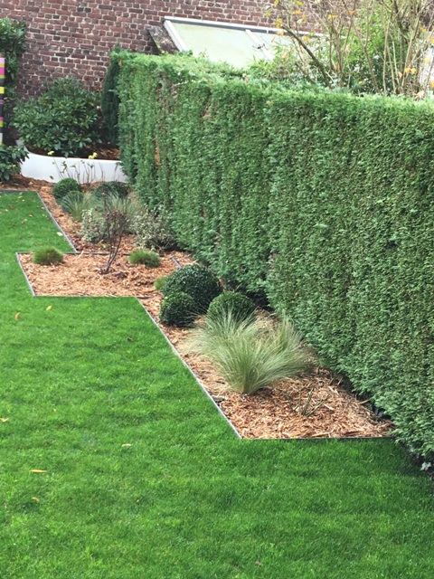 joli massif bordure ecolat jardin moderne marcq en baroeul
