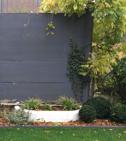 mur béton gris buis bordures droites jardin moderne marcq en baroeul
