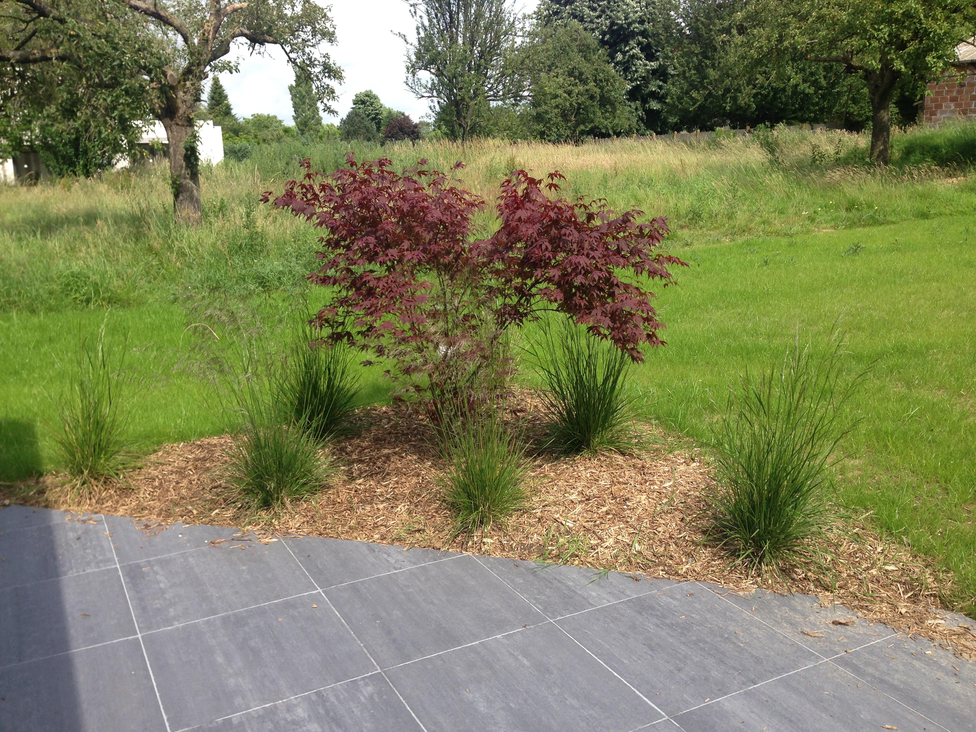 Cr ation d un massif moderne avec erable rouge et gramin es for Massif jardin moderne