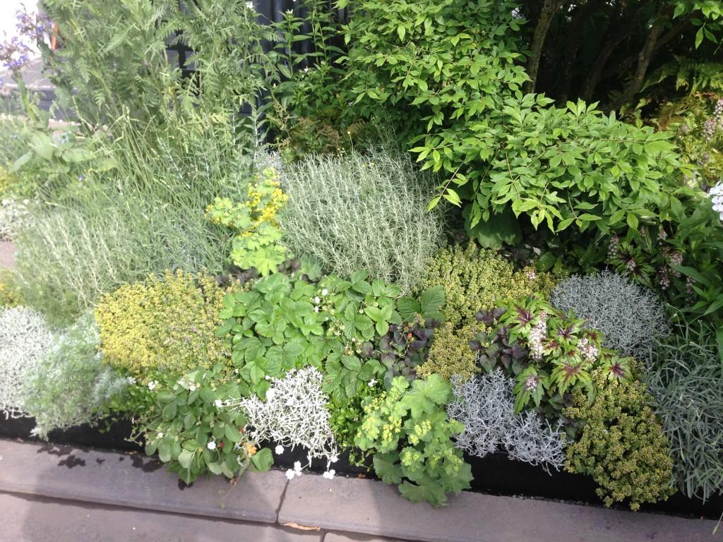 Création de massif végétal