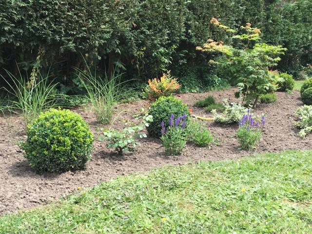 Buis graminée sauge jardin charme moderne près de Lille