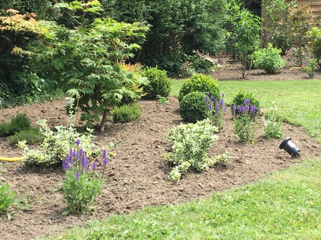 Erable buis et sauge jardin charme moderne près de Lille